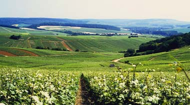 View of Mutigny and Avenay vineyards